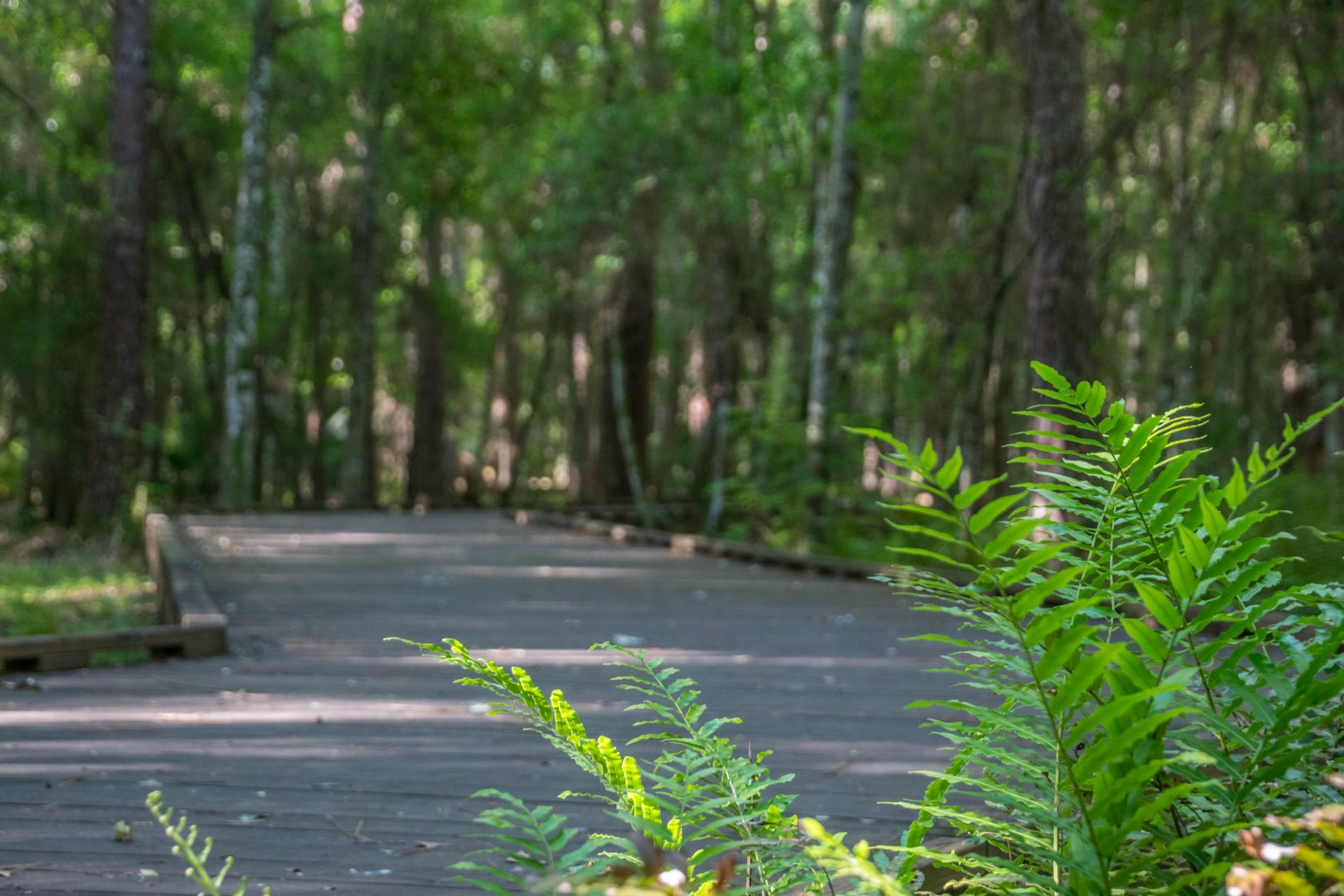 Shingle Creek Regional Trail