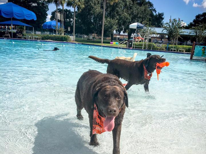 This is a photo of two dogs in the Bob Makinson Aquatic Center for Barktober fest.